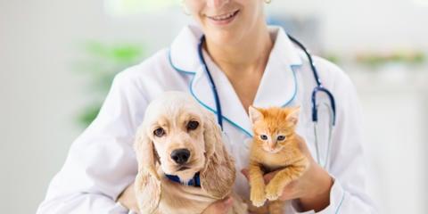 Información sobre veterinarios, consultas habituales sobre mascotas